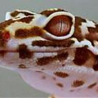 GECKOFREAK
