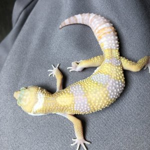 3 month old tremper